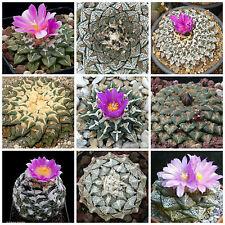 50 semi in miscuglio di Ariocarpus mix,piante grasse,seed cactus mix
