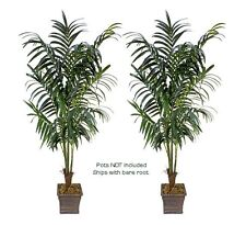TWO 8.5' Artificial Kentia Palm Tree Silk Plant Full