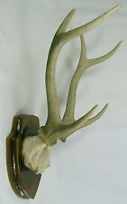 DEER ANTLER TROPHY WALL PLAQUE Bone Skull Horn NEW Polyresin Hunter Sculpture LE