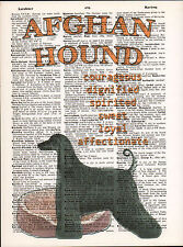 Afghan Hound Dog Traits Altered Art Print Upcycled Vintage Dictionary Page