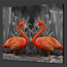 "FLAMINGOS BIRDS WALL HANGING ART PICTURE PHOTO CANVAS PRINT 12""x12"" FREE UK P&P"
