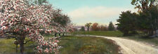 ANTIQUE Circa Early 1900s HandColored Photo SPRING ROAD IN BLOOM, Nutting Style
