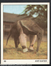 Top Sellers Card - Animals of The World - Card No 56 - Ant Eater (47)