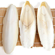 1X Cuttle Fish Cuttlefish Bone For Pet Budgie Birds Reptiles Tortoise Food BBUS