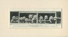 DANDIE DINMONT TERRIER DOGS ARRIVING AT DOG SHOW OLD 1935 PRINT READY MOUNTED
