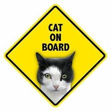 """Funny Sign - Cat (Paint) on Board 5"""" x 5"""" Window Swinger Cat Sign"""