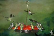 ASPECTS #143 HummZinger EXCEL, 16 oz HUMMINGBIRD FEEDER, FREE SHIPPING