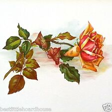 Vintage Original ORANGE ROSE FLORAL LITHOGRAPH ART PRINT NOS Unused 1909