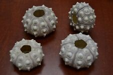 4 PCS SPUTNIK SEA URCHINS SEA SHELL BEACH WEDDING NAUTICAL #7394