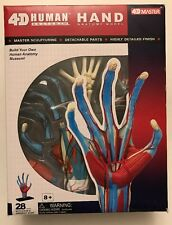 4D Human Anatomy Hand Anatomy Model # 26057 4D Master NIP Highly Detailed Finish