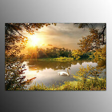 Framed Canvas Art Prints Swimming Swan Wall Art Canvas Painting For Living Room