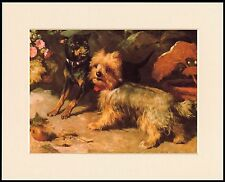 ENGLISH TOY AND YORKSHIRE TERRIER CHARMING DOG PRINT MOUNTED READY TO FRAME