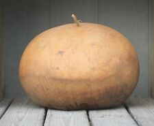 Gourd Seed: Bushel Gourds  12+ Seeds  Fresh seed  FREE Shipping