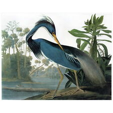 John J Audubon Louisiana Heron Deco Magnet, Birds of America Mini Gift Fridge