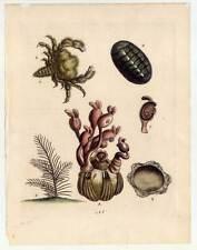 Meerestiere - Sealive - Kupferstich George Edwards 1750