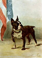1914 Maud Earl~Boston Terrier Puppy Dog~American Flag~Patriotic~NEW Note Cards