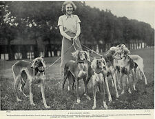 SALUKI  DOGS FROM THE NABLOUS KENNELS AND LADY OWNER OLD DOG PRINT FROM 1935