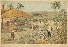 Original Vintage Poster Petit Journal France 1900 Sugar Cane Farming Slavery Art