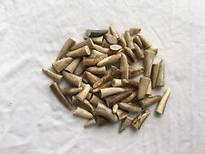 70 Deer Antler Tips, Jewellery Making Crafts Taxidermy Bushcraft Pagan Christmas