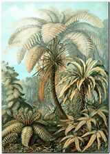 "ERNST HAECKEL CANVAS PRINT Art Nouveau Tree Fern 8""X 10"" Filicinae"