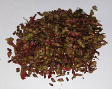 Red Japanese Maple, Acer palmatum atropurpureum, 10 tree seeds.