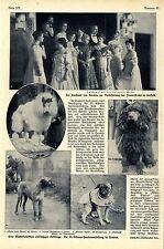 Die St.- Albans- Hundeausstellung in London Die Sieger Wolfshund Mops Reh...1908