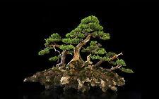 Framed Print - Japanese Bonsai Tree (Picture Poster Art Garden Flowers Japan)