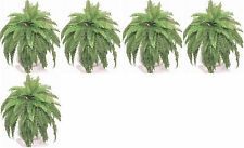 "5 BOSTON FERN 48"" SPREAD X 75 SILK LEAF BUSH PLANT ARTIFICIALTREE PALM FLOWER"