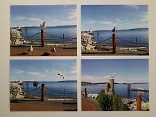 Shore Birds in SIDNEY BC VANCOUVER ISLAND CANADA GLASS BEACH  4 Postcard Set