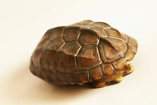 Asia Natural Turtle shell for arts & crafts #SM01