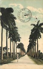 1907-1915 Printed Postcard; Avenue of Royal Palms, Havana Cuba