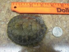 Turtle Shell Map Turtle SMALL Crafts Necklaces and More #M12