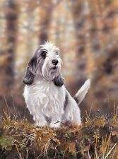 "PETIT BASSET GRIFFON VENDEEN PBGV DOG FINE ART LIMITED EDITION PRINT ""Jilly"""