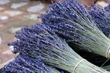 Natural Dried French Provence Fragrant Lavender Bunch Tied by Hand 300 stems