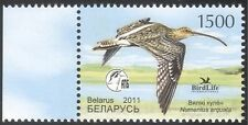 Belarus 2011 Curlew/Birds/Nature/Wildlife/Conservation/Environment 1v (n32350)