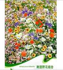 FD1460 Colorful Waterlogging Tolerance Wildflowers Mix Flower Seed ~200 Seeds~