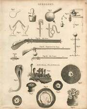 1802  Aerology Air Gun Air Cane Animal Flowers Copperplate