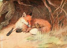 Cecil Aldin White Ear & Peter Fox 1912 Art Repro Photo Print Picture No.6