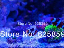 10pcs 10W Royal Blue LED 450nm-455nm For Aquarium light & plant 32milx32mil