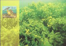 Maxicard Finland 2003 Plankton Weed Grass Marine Life Ocean maximum card