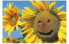 SONNENBLUME / SUNFLOWER POSTER SMILE FACE