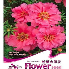 FD1665 Portulaca Grandiflora Pink Sun Plant Seeds Rare Hot ~1 Pack 200 Seeds ~