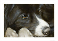 BORDER COLLIE DOG PORTRAIT by JOHN SILVER. SIGNED A4 or A3 SIZE PRINT BC266SP