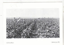"""*Postcard-""""The Cotton Field"""" ...in Bastrop County- @ Smithville, Texas (#77)"""