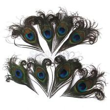 10 Natural Peacock Eye Tail Feathers DIY Party Craft Decoration 10-12cm Long