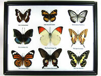 Mix 9 Real Butterfly Cool Set Display Insect Taxidermy in Frame Gift FS gpasy #4