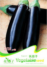 30 Original Pack Seeds Eggplant Seeds Solanum Melongena Aubergine Organic C041