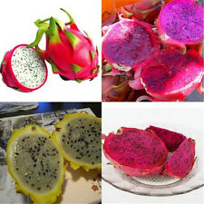 200pcs 4 Kind Rare Pitaya Dragon Fruit Seeds Delicious Plants Seed Home Garden