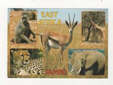 East Africa Jambo Wildlife Postcard 587a