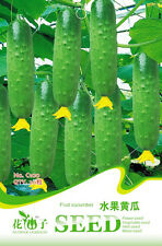 20 Original Pack Seeds Fruit Cucumber Seeds Mini Cuke Cucumis Sativus C100